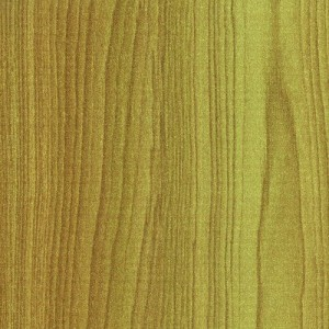 50281 PL - Limber Maple
